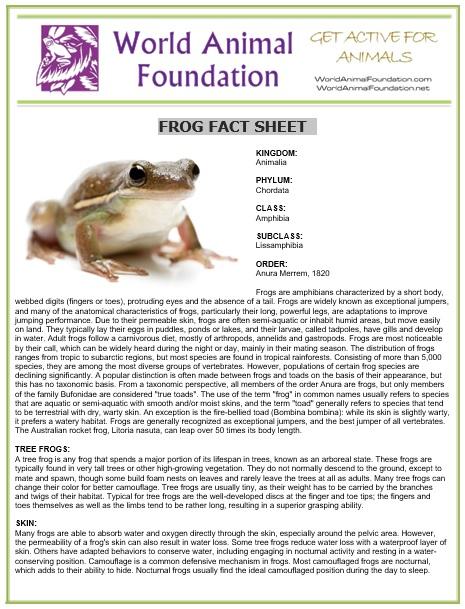 frog fact sheet